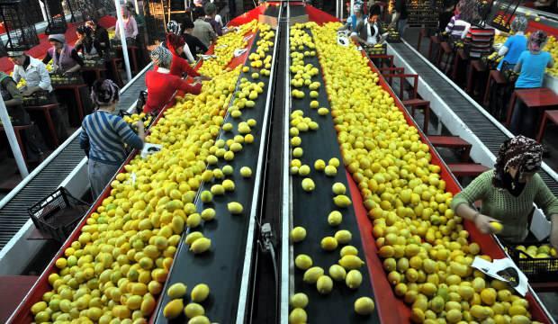 ABD, İtalya ve İspanya'dan Türk sebzesine talepte artış